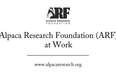 """Alpaca Research Foundation – (ARF) At Work."""